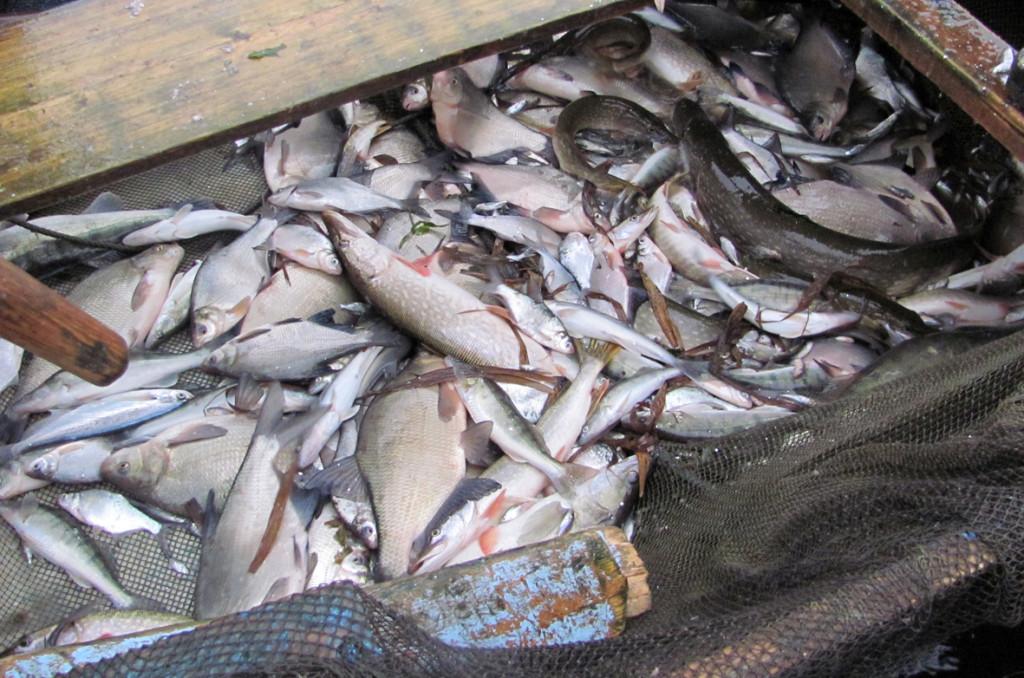 Где в костроме можно ловить рыбу